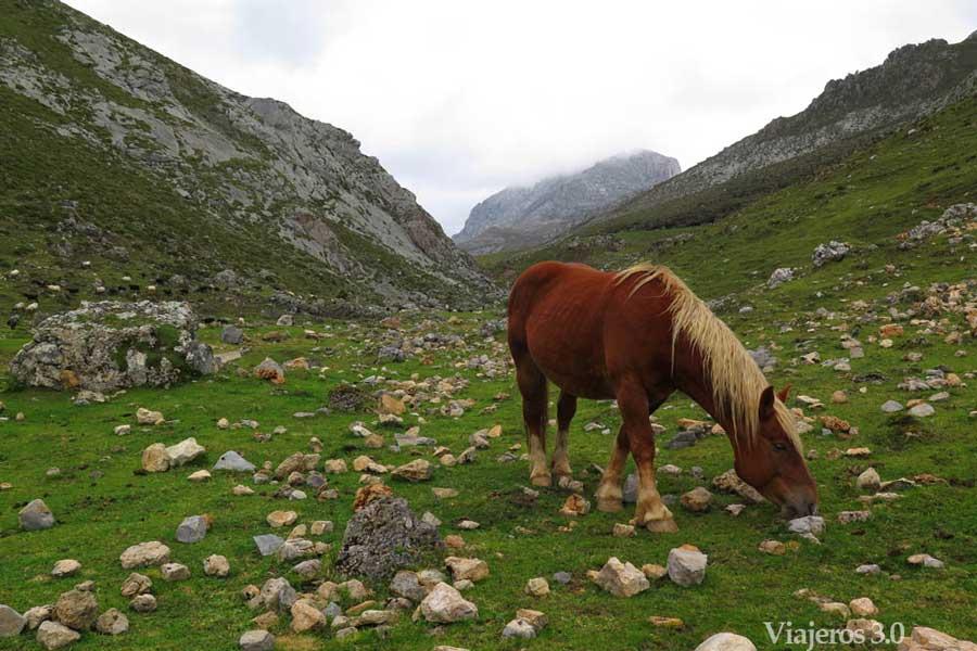 praderías de Áliva, Picos de Europa