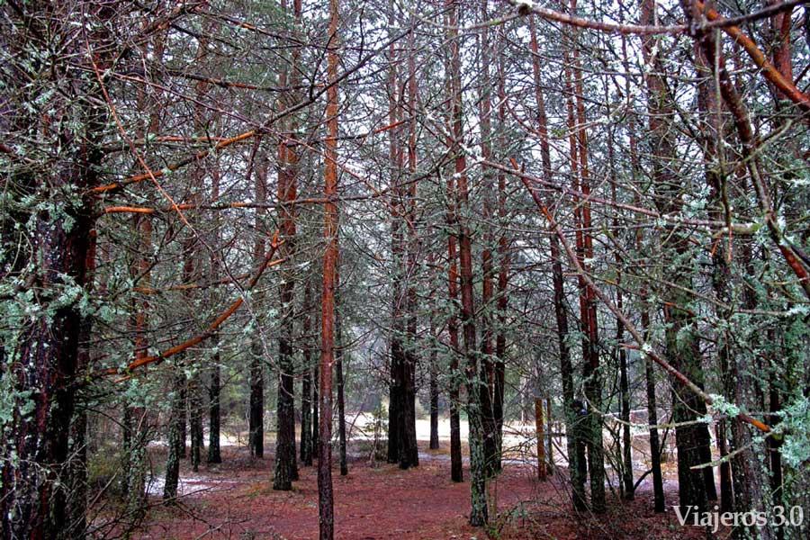 bosque nacimiento del río Cuervo
