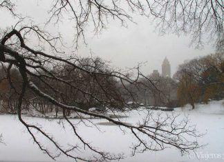 nevada en Nueva York