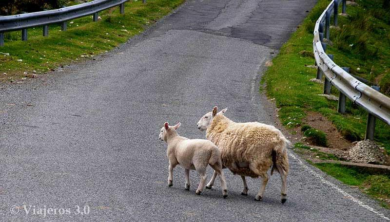 Carreteras, conducir por la izquierda en Escocia