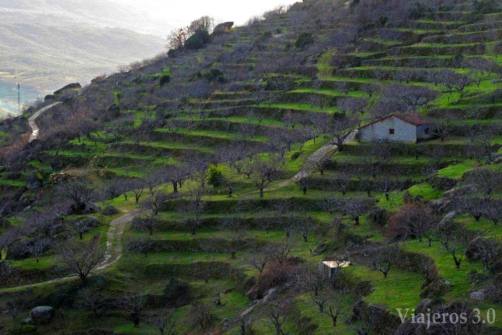 Cerezos en el Valle del Jerte.