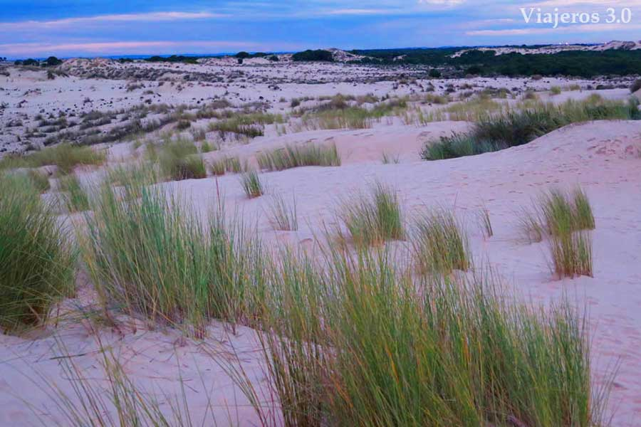 dunas en el Parque Nacional de Doñana