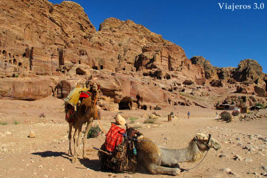 camellos en Petra