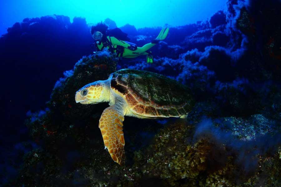 Bucear entre tortugas. Submarinismo y snorkel en Las Canarias.