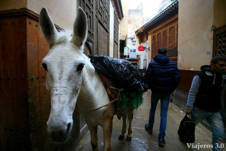 Visitar Fez: caos en La Medina