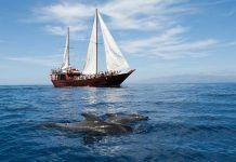 Avistamiento de cetáceos en Tenerife