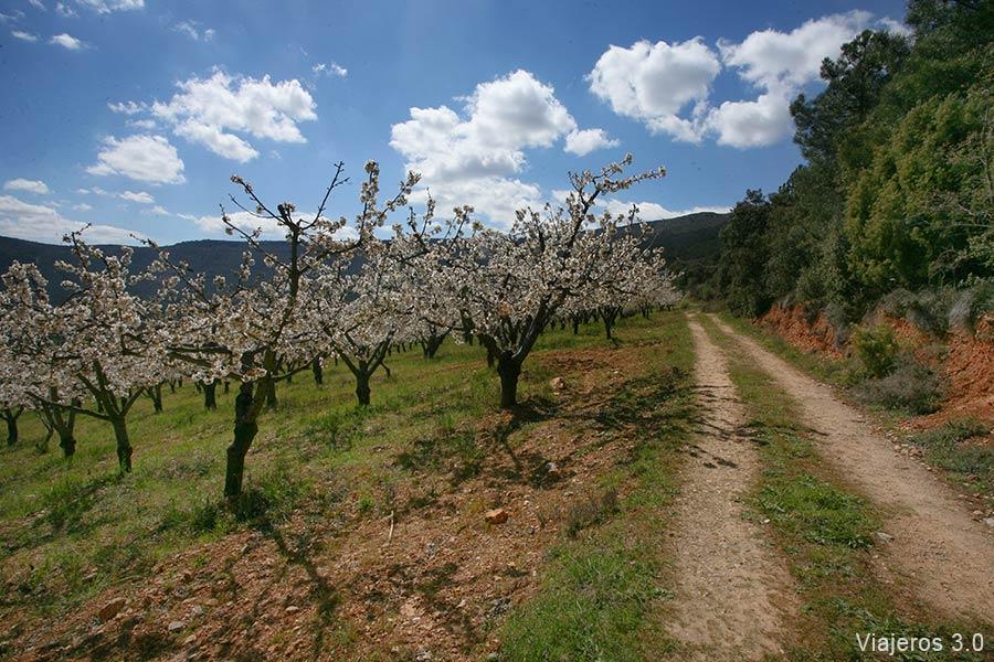 ruta de los cerezos en el Valle de Caderechas