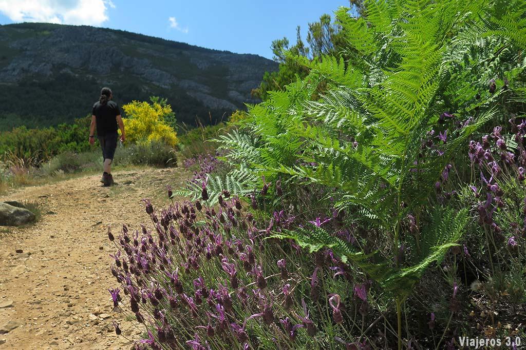 Ruta Valverde de los Arroyos y la chorrera de Despeñalagua