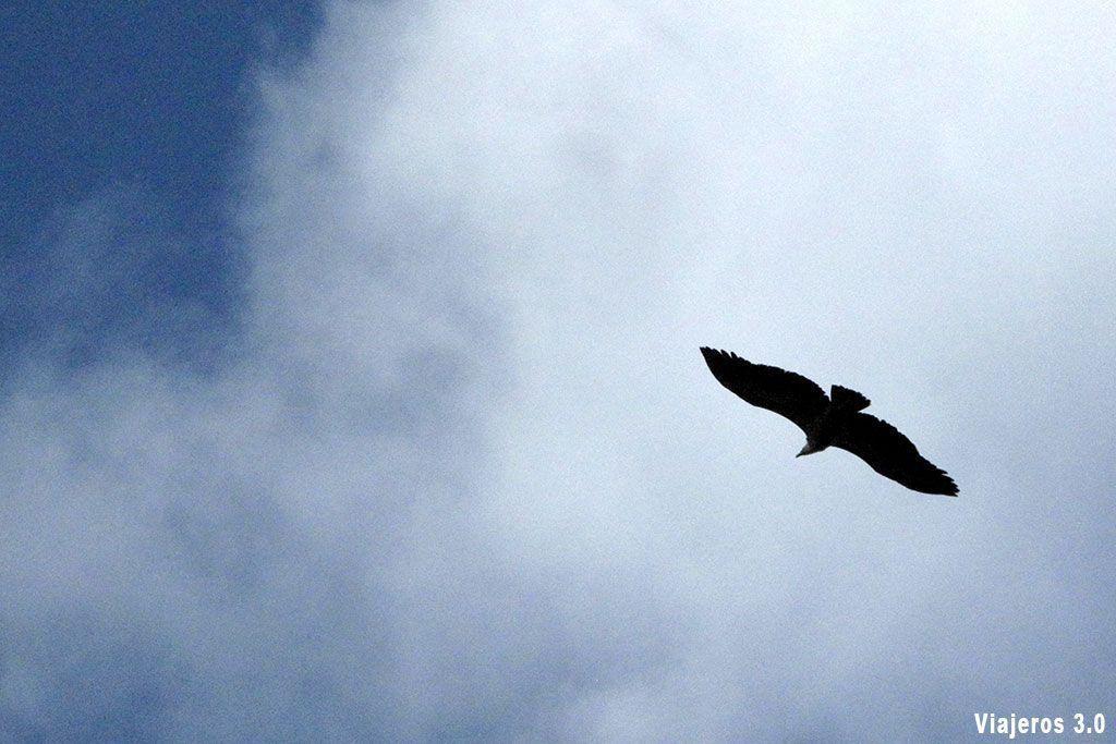 Buitres en el Parque Nacional de Monfragüe.