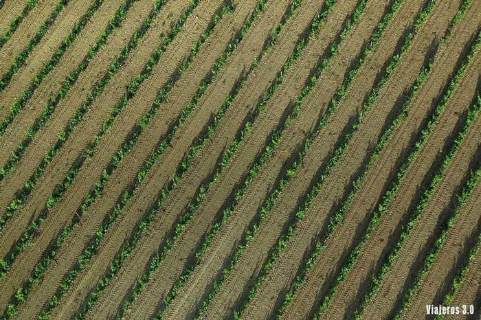 campos de viñedos, volar en globo por La Rioja