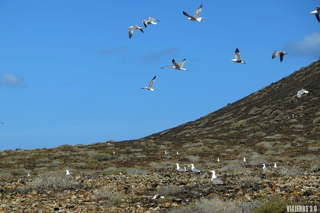 qué hacer y qué ver en la isla de Lobos