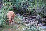 Qué ver en Sierra de Cebollera: senda de La Blanca