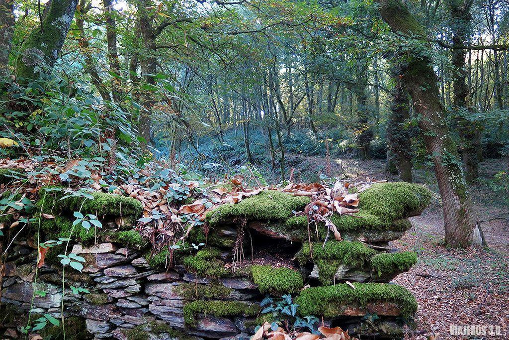 Bosques, un fin de semana en Lalín