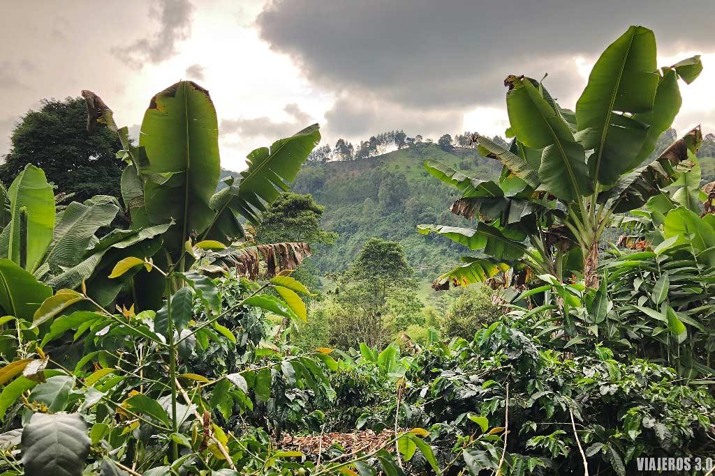 finca del Eje Cafetero en Colombia