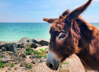 Constanza y costa del Mar Negro, playas en Rumanía