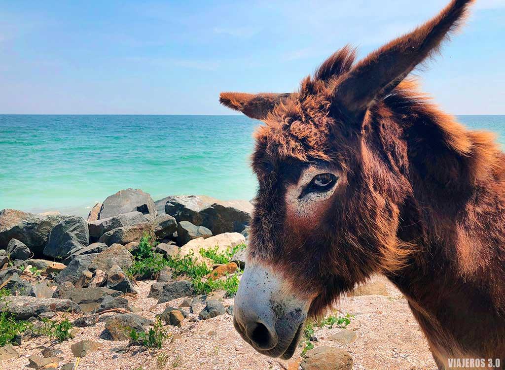 Curiosa estampa en la costa del Mar Negro.