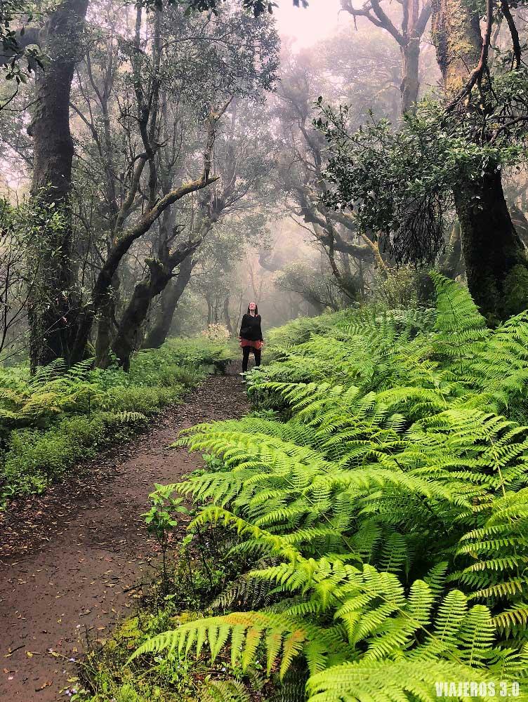 Bosques de Laurisilva, que ver en El Hierro