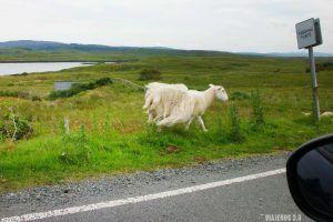 Consejos para conducir en Escocia por la izquierda