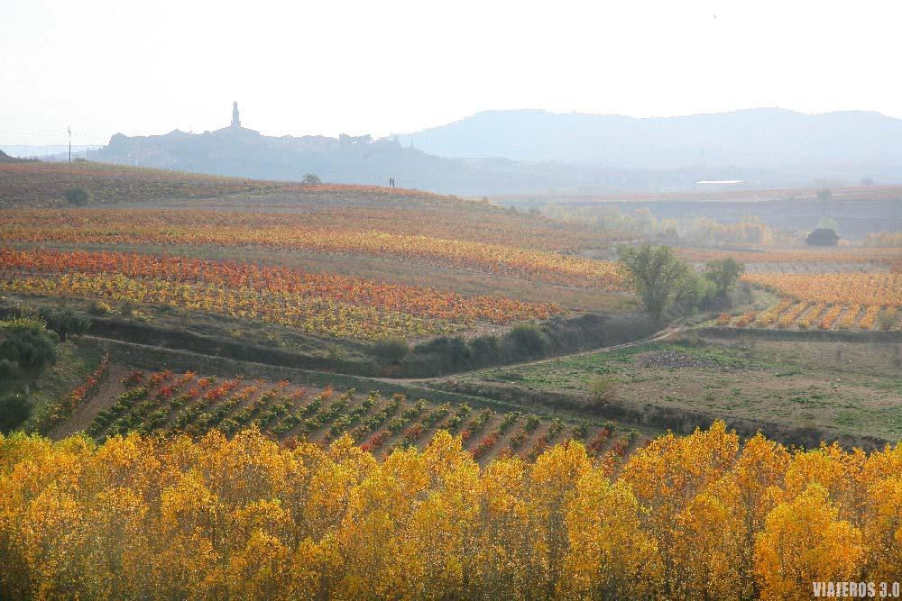Mar de viñedos en otoño, qué ver en La Rioja