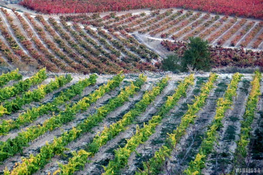 Otoño en las viñas de La Rioja