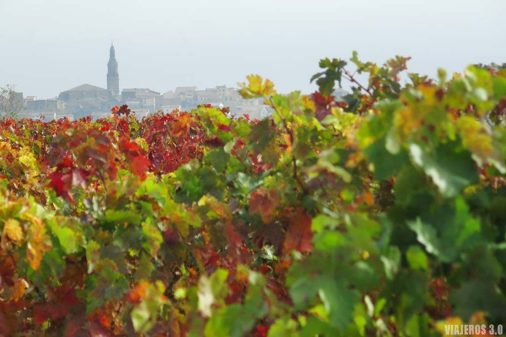 Bodegas Vivanco, viñedos de La Rioja en otoño