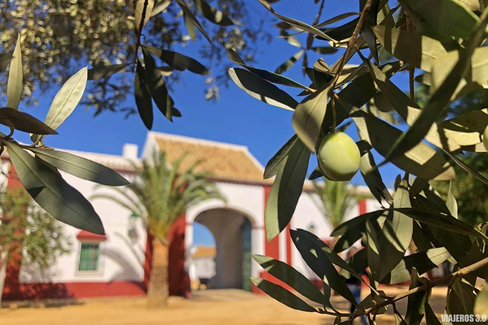 Oleoturismo en Sevilla, Hacienda Guzmán