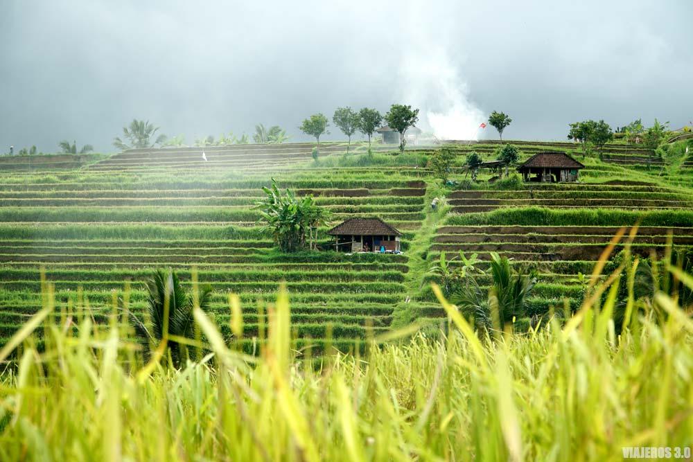 Arrozales balineses, qué ver en Bali, Indonesia.