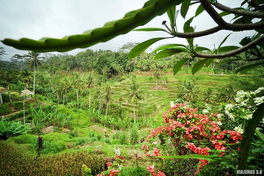 Campos de arroz, que hacer y que ver en Ubud