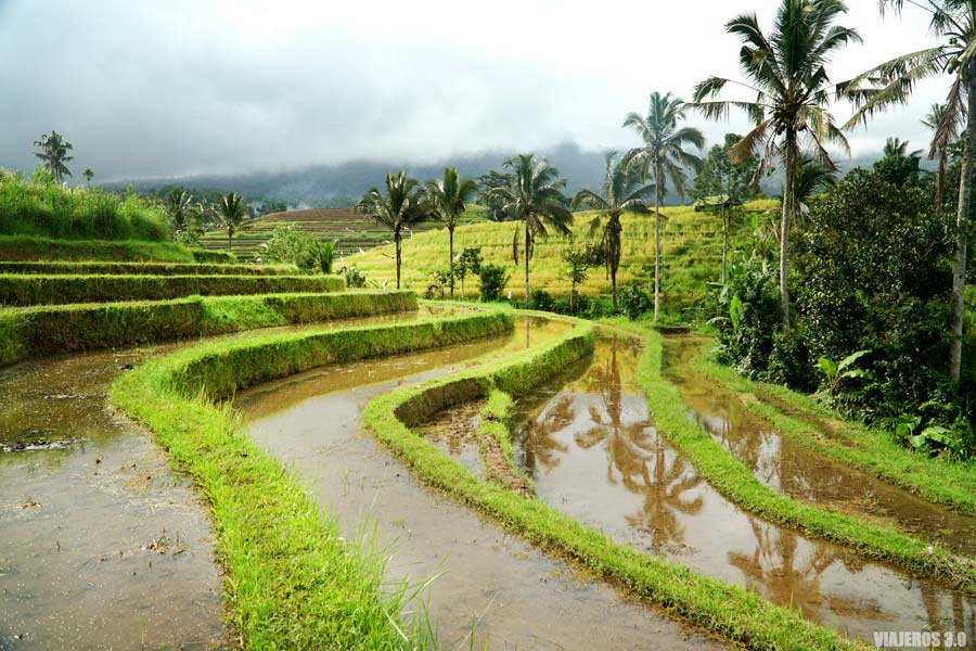 Viajar a Indonesia por libre, arrozales de Bali