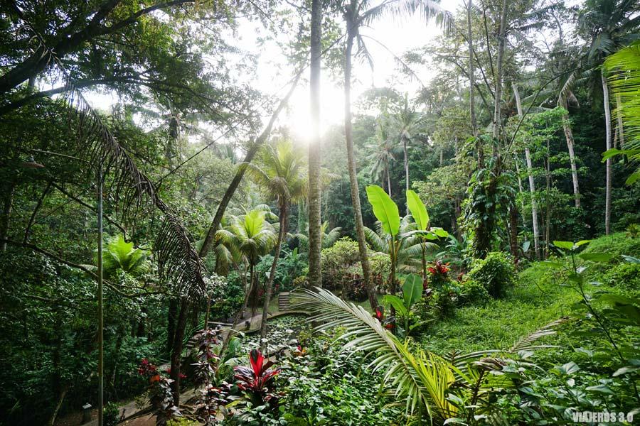 Paisajes selváticos en Bali.