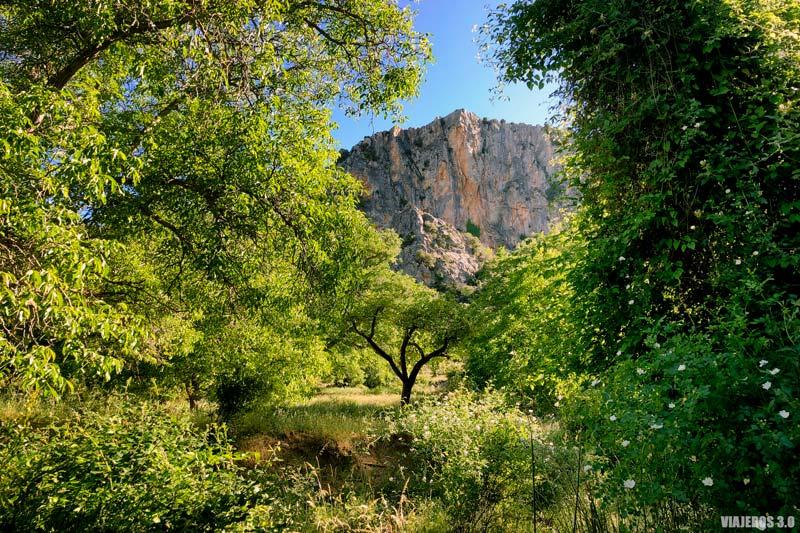 Ruta de los Nogales Centenarios en Nerpio