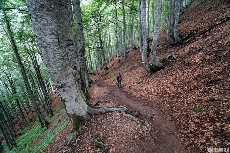 Bosques en la ruta de Valbona a Theth.