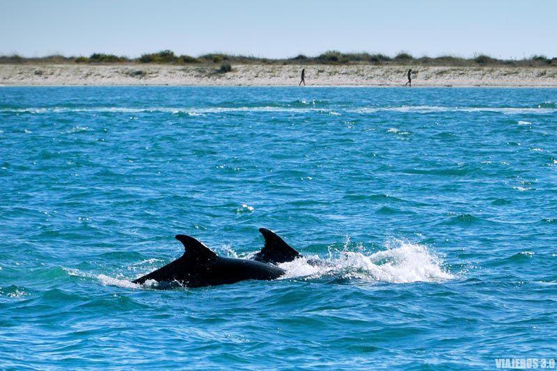Delfines de Setúbal.