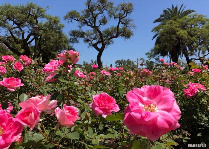 Bosques de Palermo, free tour de Buenos Aires