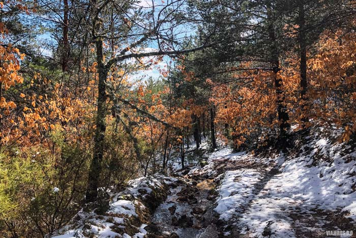 Bosques en Covaleda, Soria