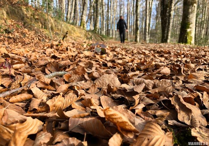 Selva de Irati, qué hacer en Navarra