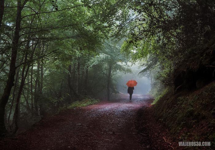 Bosque de Peloño en el Parque Natural de Ponga.