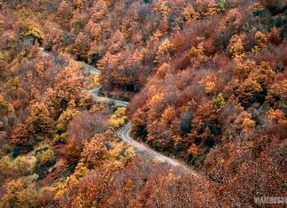 bosques de otoño en León
