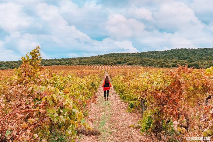 Viñedos en Toro, Ruta del vino de Toro