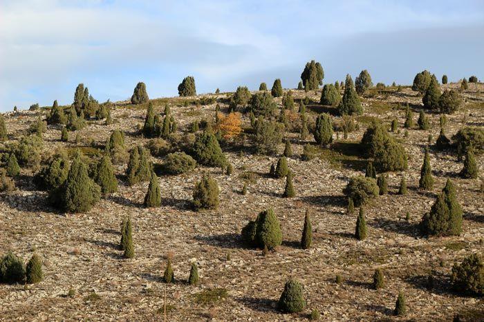 Sabinar de Mirantes de Luna, bosques en León