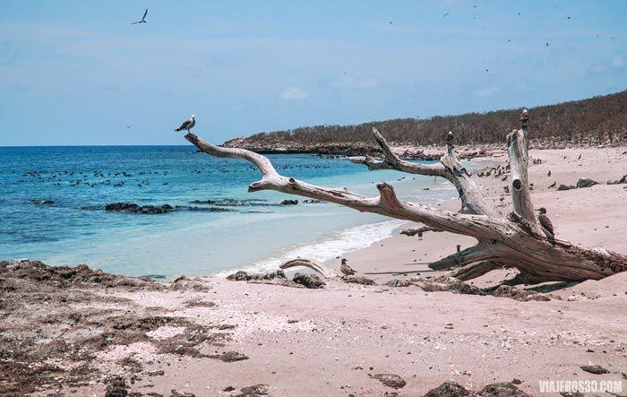 Playas del Parque Nacional Isla Isabel en México
