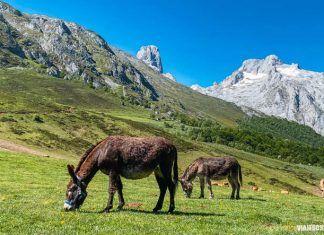 Ruta al refugio del Picu Urriellu